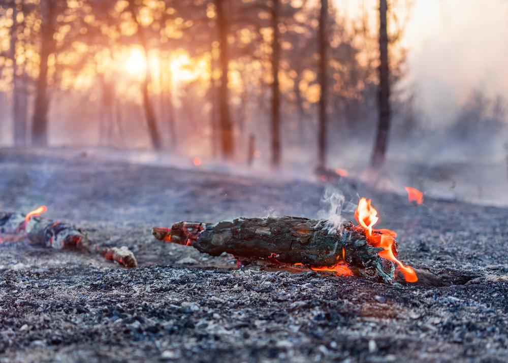 Изменение климата: пожары в Европе уже превзошли прошлогодние.Вокруг Света. Украина