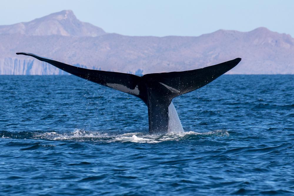 В Италии нашли рекордно большой скелет кита.Вокруг Света. Украина