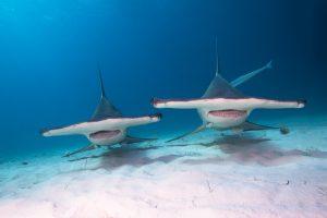 В крупнейшем аквариуме Франции 30 исчезающих акул  съели друг друга