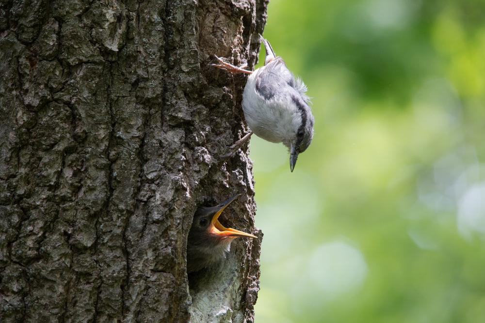 Птенец выпал из гнезда: как ему помочь?.Вокруг Света. Украина