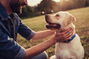 Могут ли собаки улыбаться людям?