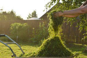 Почему нам так нравится запах скошенной травы?