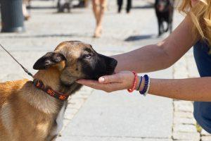 В Шотландии собаки-терапевты будут лечить пассажиров с аэрофобией
