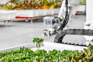 В Калифорнии зелень выращивают роботы