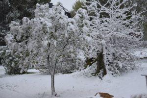 На юге Бельгии выпал снег