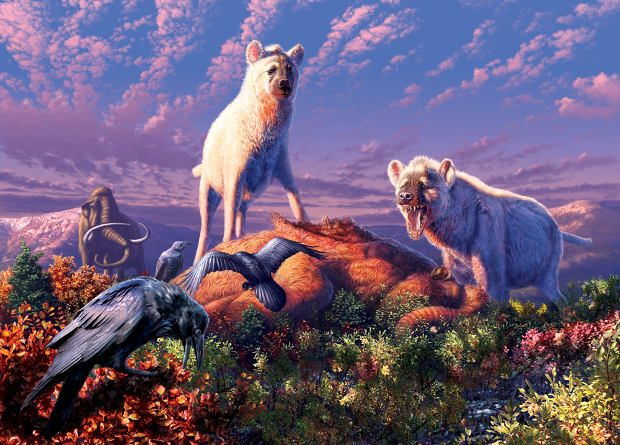 В Арктике 1,5 миллиона лет назад жили гиены