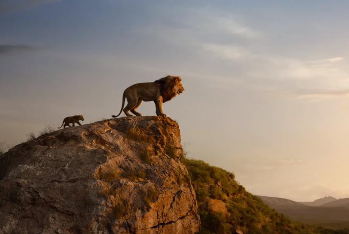 Disney спонсирует восстановление популяции львов в Африке.Вокруг Света. Украина