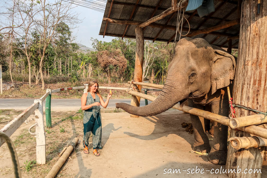 слоны в Пае