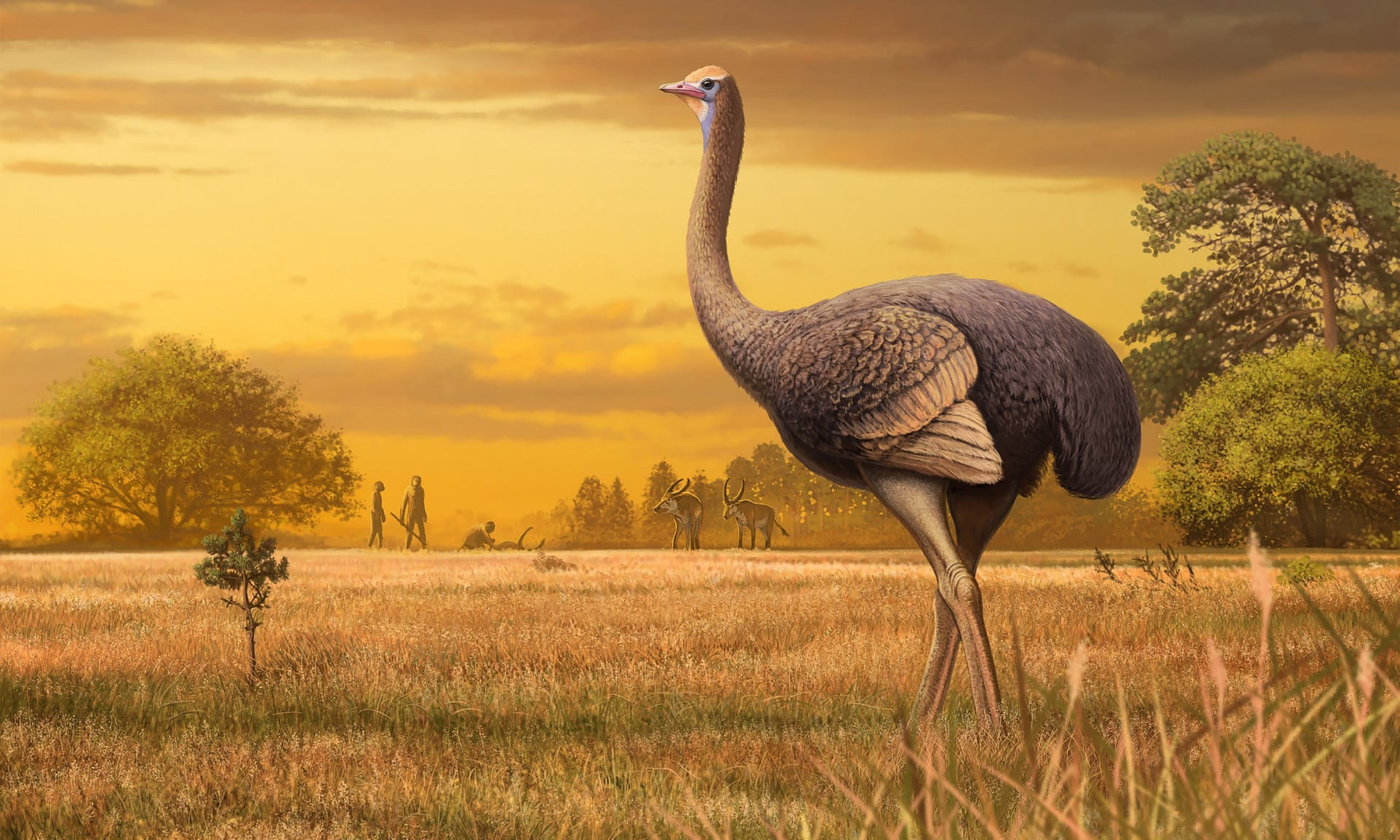 В Крыму нашли останки древней птицы, весившей полтонны