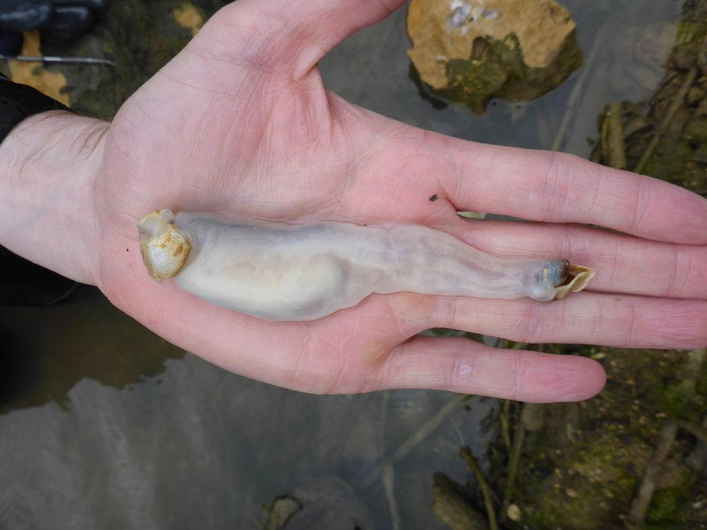 На Филиппинах нашли червей, питающихся камнями