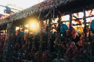 Испанец построил винный погреб на дне моря