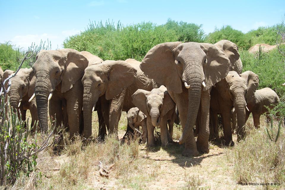 В заповеднике Мозамбика исчезли браконьеры.Вокруг Света. Украина