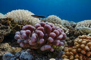 Pantone выбрал еще три цвета года в честь исчезающих кораллов