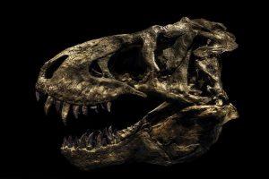 Немецкий фотограф оживил скелеты динозавров