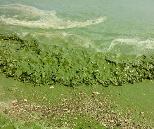 В Одессе море стало зеленым