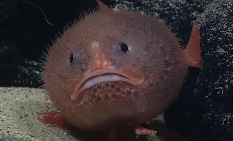 Найдена рыба, задерживающая дыхание под водой