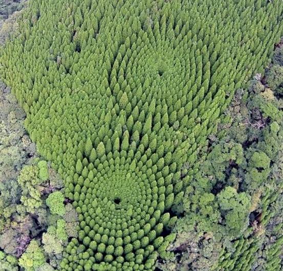 Появилась разгадка японского сферического леса