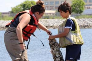 В Нью-Йорке школьники выращивают устриц, чтобы очистить воду в заливе