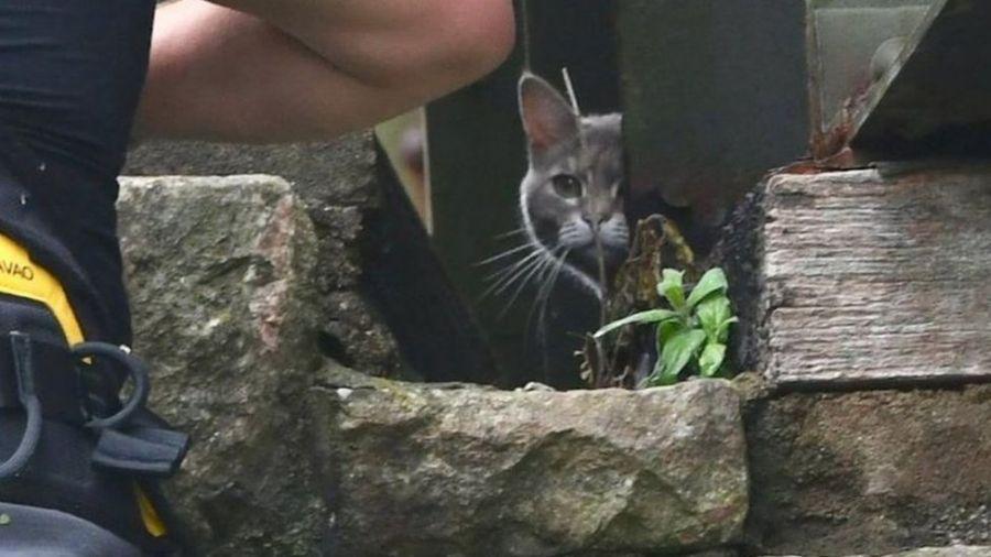 В Великобритании кошка почти неделю дразнила спасателей