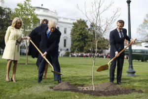 В США погибло дерево дружбы Макрона и Трампа