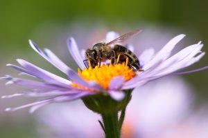 Пчелы способны к абстрактному мышлению - новое исследование
