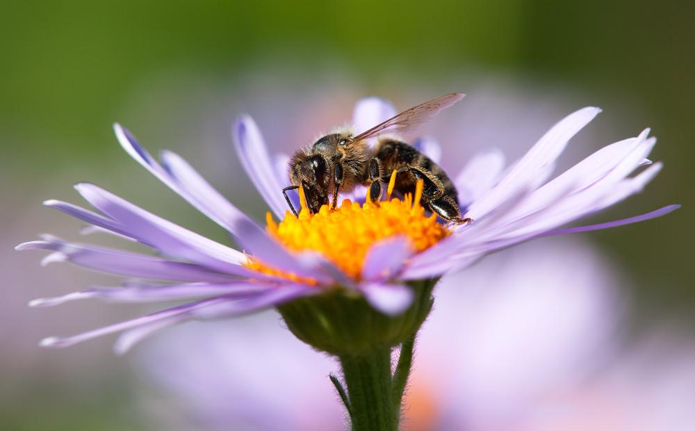 Пчелы способны к абстрактному мышлению - новое исследование.Вокруг Света. Украина