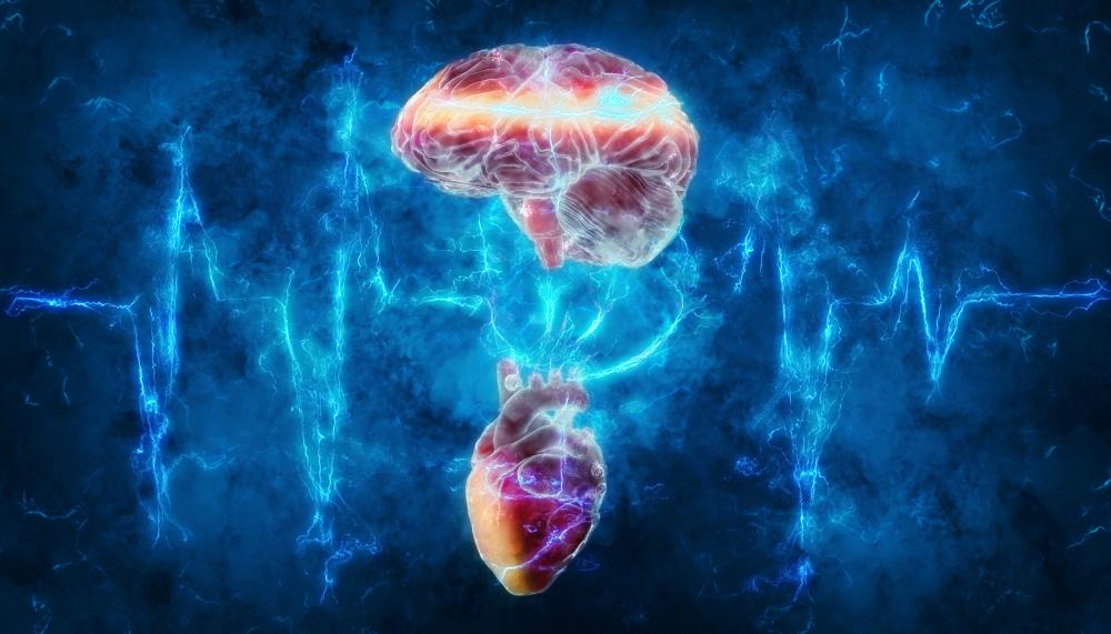 Болезни сердца опасны для мозга