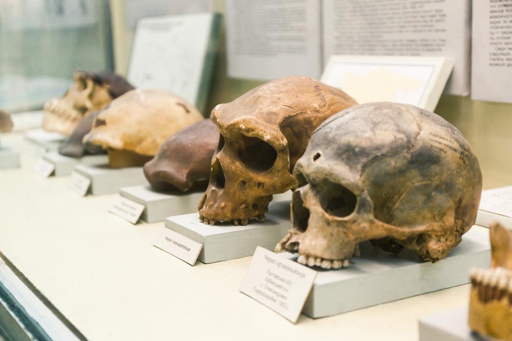 Эволюция человека может продолжаться из-за углеводов.Вокруг Света. Украина
