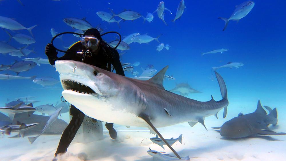 На Багамах акулы убили девушку