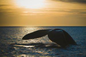 На Аляске записали серенаду влюбленного кита
