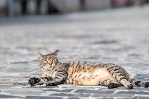Во Львове посчитают уличных котов