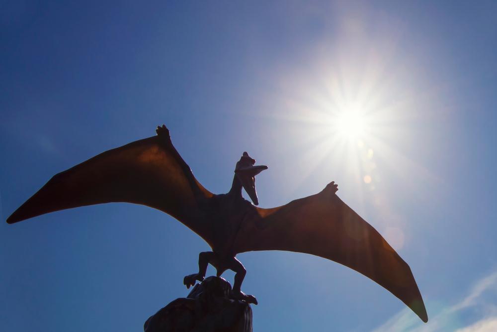 Палеонтологи объяснили рекордные крылья птерозавров.Вокруг Света. Украина