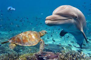 Дельфины заводят друзей по общим интересам