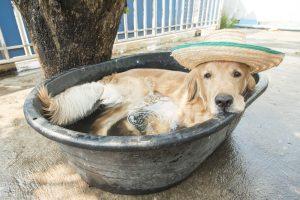 В Украине запустили флешмоб по спасению животных от жары