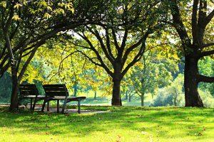 Два часа на природе в неделю значительно укрепляют здоровье