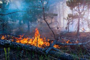 В Украине объявлен высший уровень пожароопасности