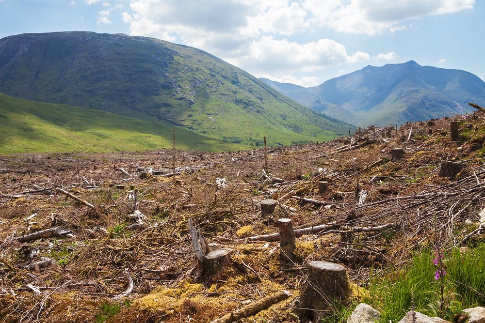 За 10 лет крупные бренды вырубили лес на территории размером с Испанию