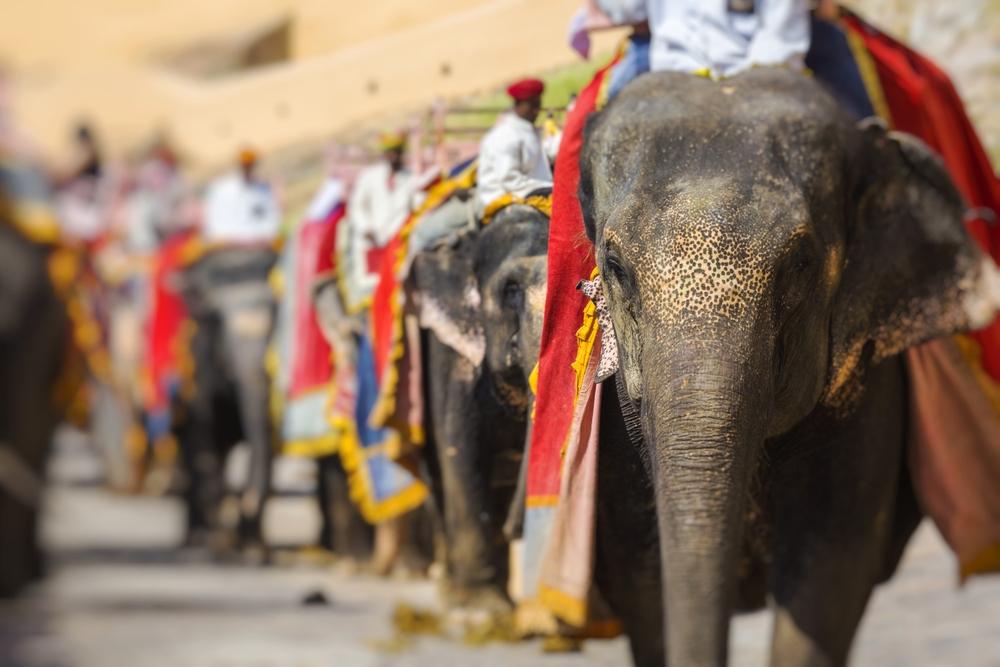 Зоозащитники в Индии протестуют против перевозки слонов по железной дороге.Вокруг Света. Украина