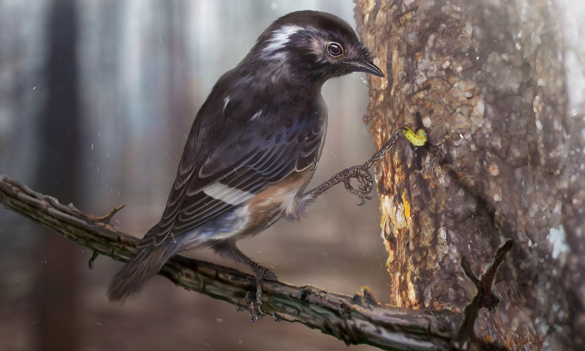 Найдены останки древней птицы с необычно длинными пальцами