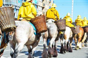 В Бельгии лошади ловят креветок вот уже 600 лет