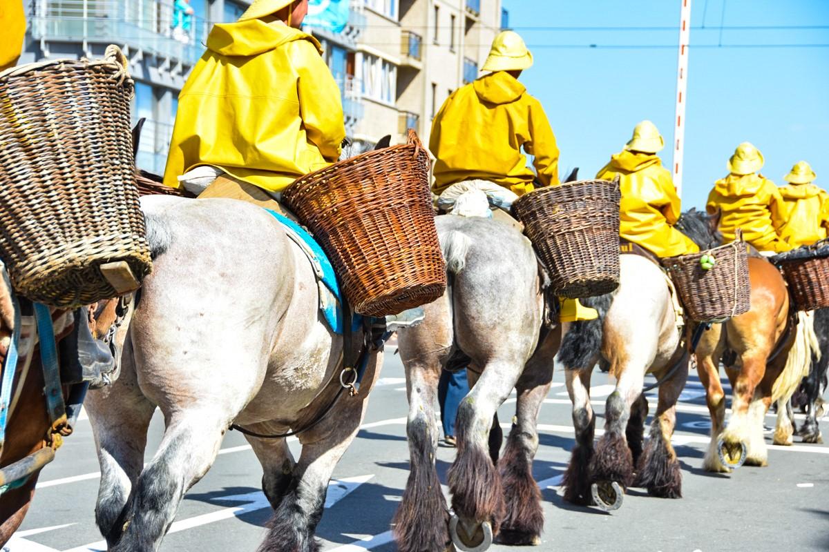 В Бельгии лошади ловят креветок вот уже 600 лет.Вокруг Света. Украина