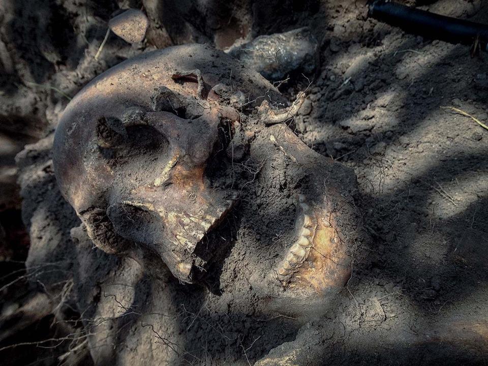 В Житомирской области нашли массовое захоронение детей.Вокруг Света. Украина