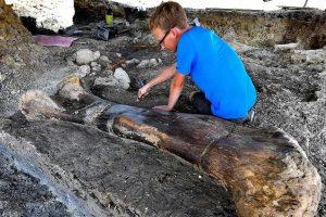 Во Франции обнаружили кость динозавра рекордных размеров