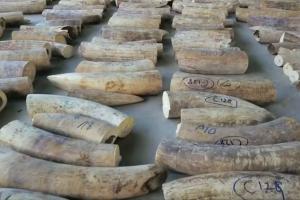 В Сингапуре обнаружена огромная партия контрабандной слоновой кости