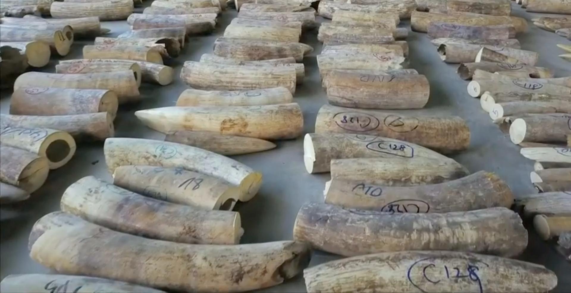 В Сингапуре обнаружена огромная партия контрабандной слоновой кости.Вокруг Света. Украина