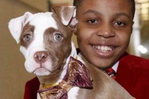 Мальчик из США делает галстуки-бабочки для бездомных животных