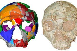 В Греции обнаружены древнейшие за пределами Африки человеческие останки