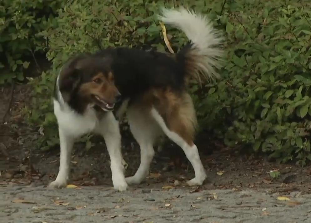 В Польше влюбленный пес сбежал из дому и уехал на поезде к своей избраннице.Вокруг Света. Украина