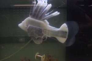 Шевели плавниками: рыба-робот плавает медленно, зато долго