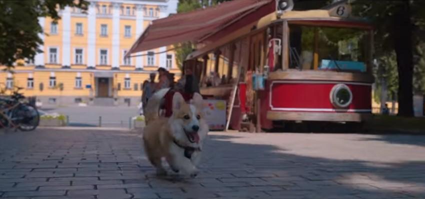 В Киеве сняли веселый промо-ролик о путешествии корги